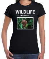 Orang oetan aap foto t-shirt zwart voor dames wildlife of the world cadeau shirt orang oetans liefhebber kopen