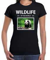 Panda foto t-shirt zwart voor dames wildlife of the world cadeau shirt pandas liefhebber kopen